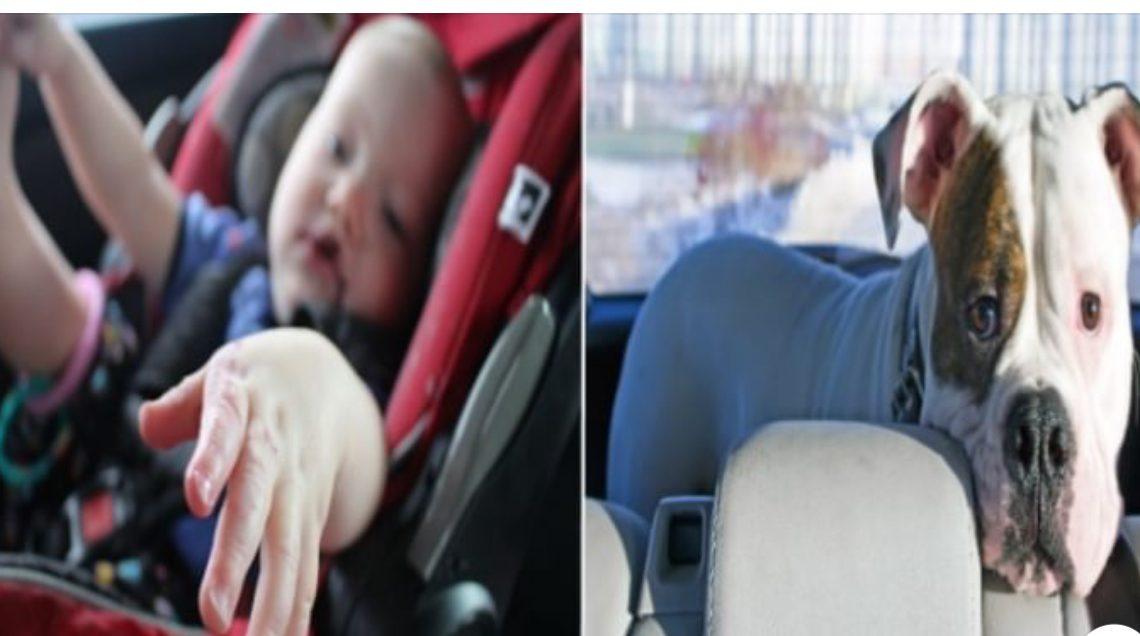 Ushuaia: proponen multas a quienes dejen a niños o animales dentro del vehículo