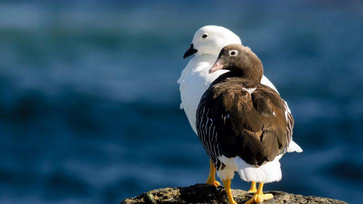 Todavía podés visitar el Festival de Aves de la Reserva Costa Atlántica