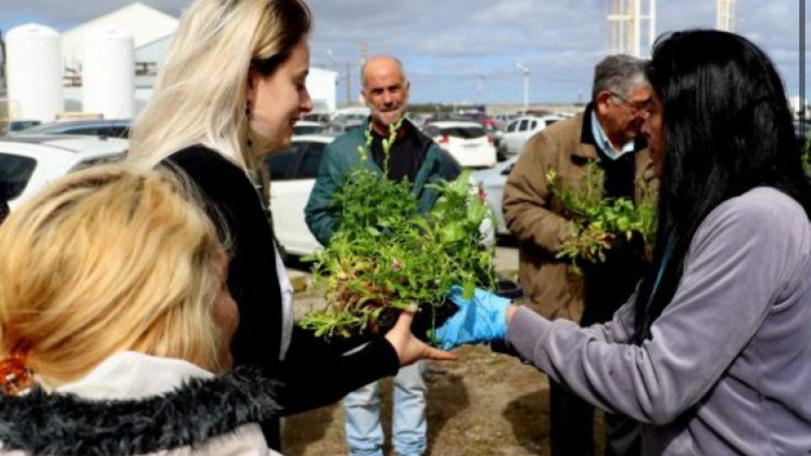 Jueves y Viernes entrega gratuita de plantines en Río Grande