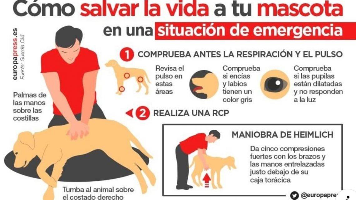 Cómo Salvar La Vida A Tu Mascota En Una Situación De Emergencia