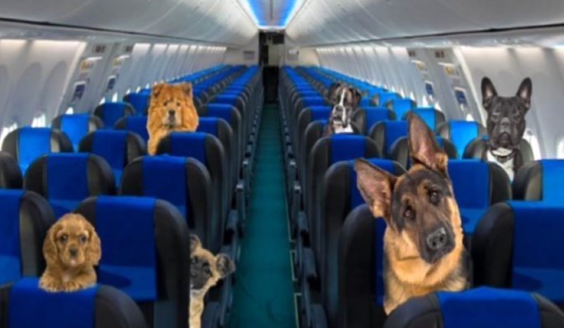 Aerolíneas Argentinas ahora permite perros acompañantes