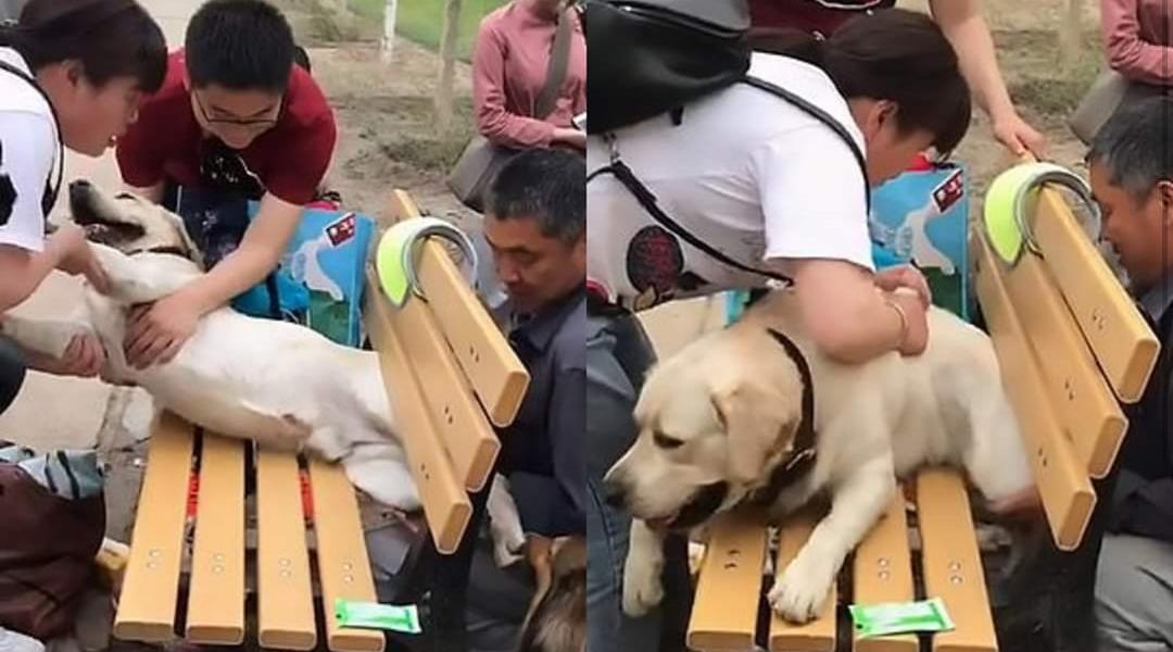 Un perro quedó atrapado en un banco por su sobrepeso