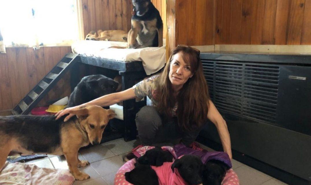 Una protectora de animales solicita colaboración y cuenta su situación
