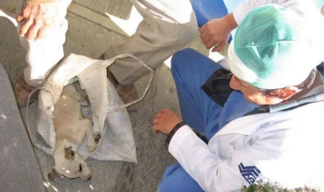 Anciano No Sabía Qué Hacer Con Su Perrito Enfermo, Decidió Llevarlo Al Hospital De Humanos