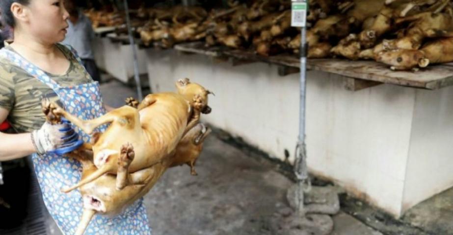 Pese a la alerta sanitaria por el coronavirus, China abrió su feria anual de carne de perro