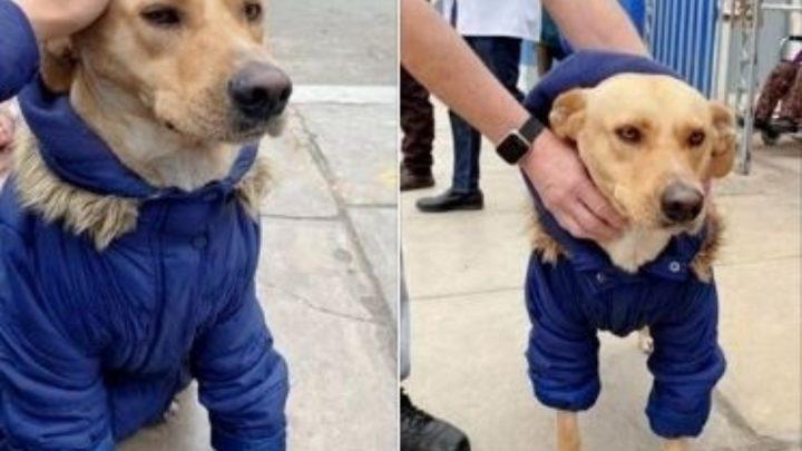 Perrito espera en la puerta del hospital a su dueño internado por coronavirus