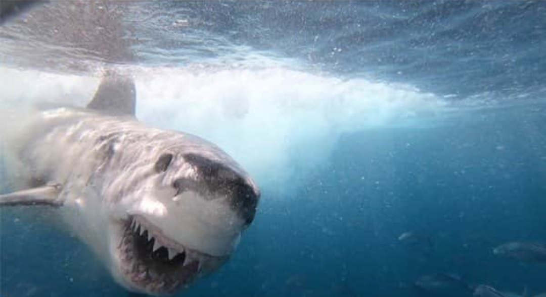 Estaba grabando un documental sobre tiburones y en su día libre fue mordida por uno de ellos