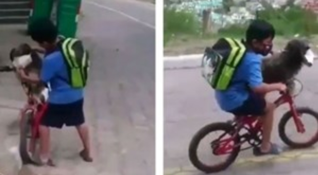 Video: el nene que le pone tapabocas a su perro para cuidarlo del coronavirus