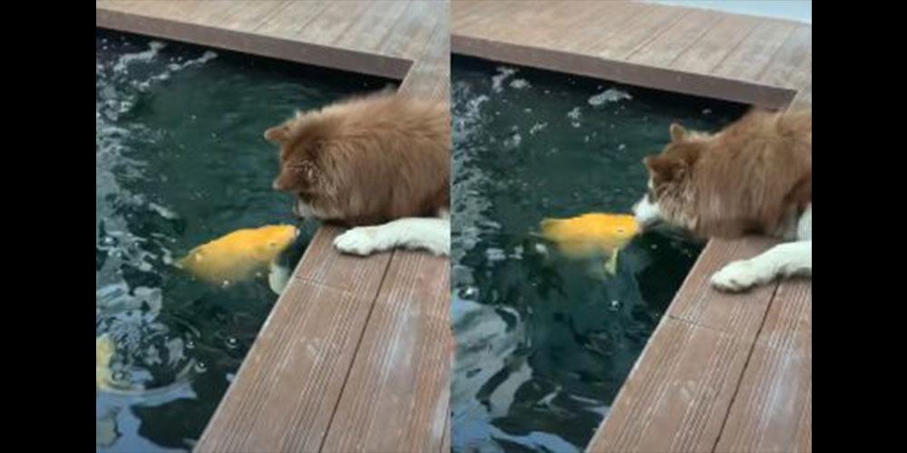 El cariñoso encuentro (a los besos) entre un perro y un pez