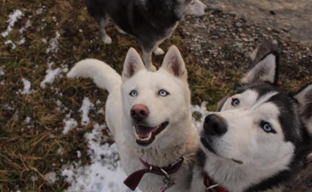 Desesperada búsqueda: Ofrece 50 mil de recompensa a quien devuelva con sus mascotas