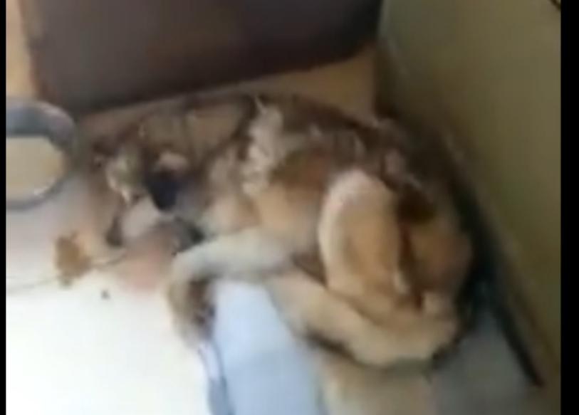La Justicia allanó una protectora de animales y se llevó un perro que había sido rescatado