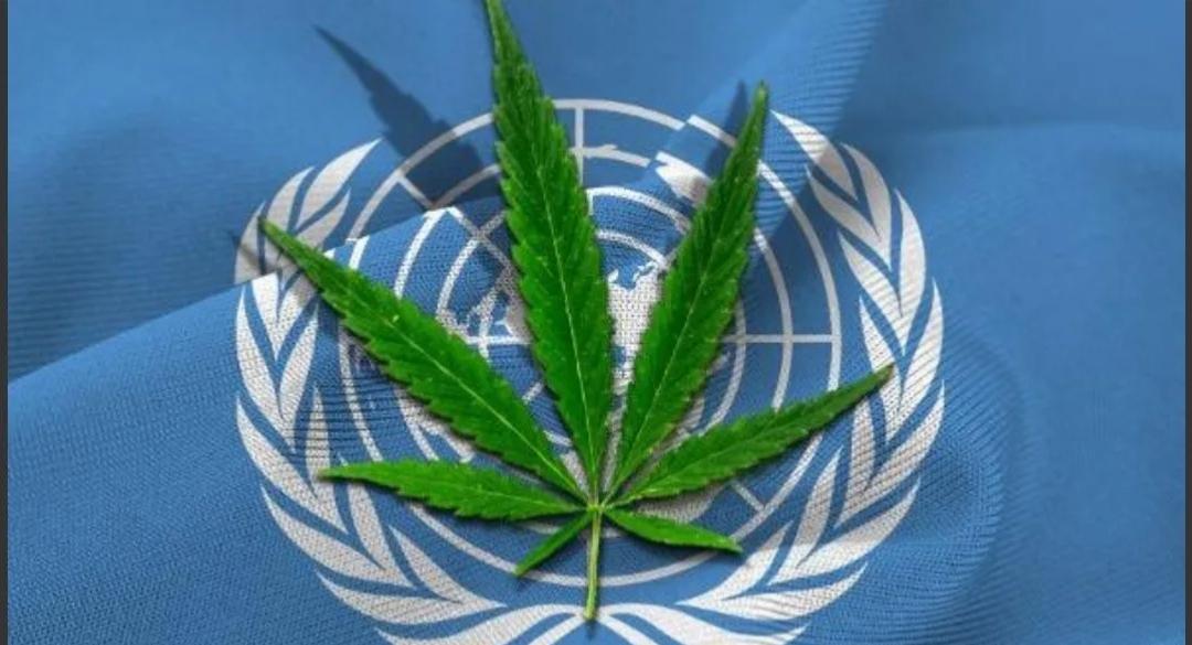 La ONU reconoció los beneficios medicinales del cannabis