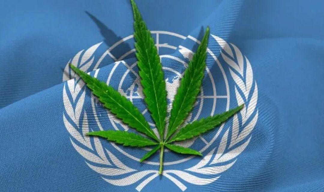 Eliminaron al cannabis de la lista de drogas peligrosas