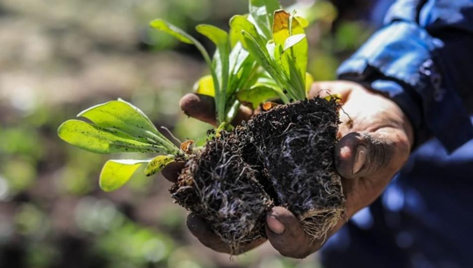 Se entregarán más de 50 mil plantines a vecinos y vecinas de la ciudad