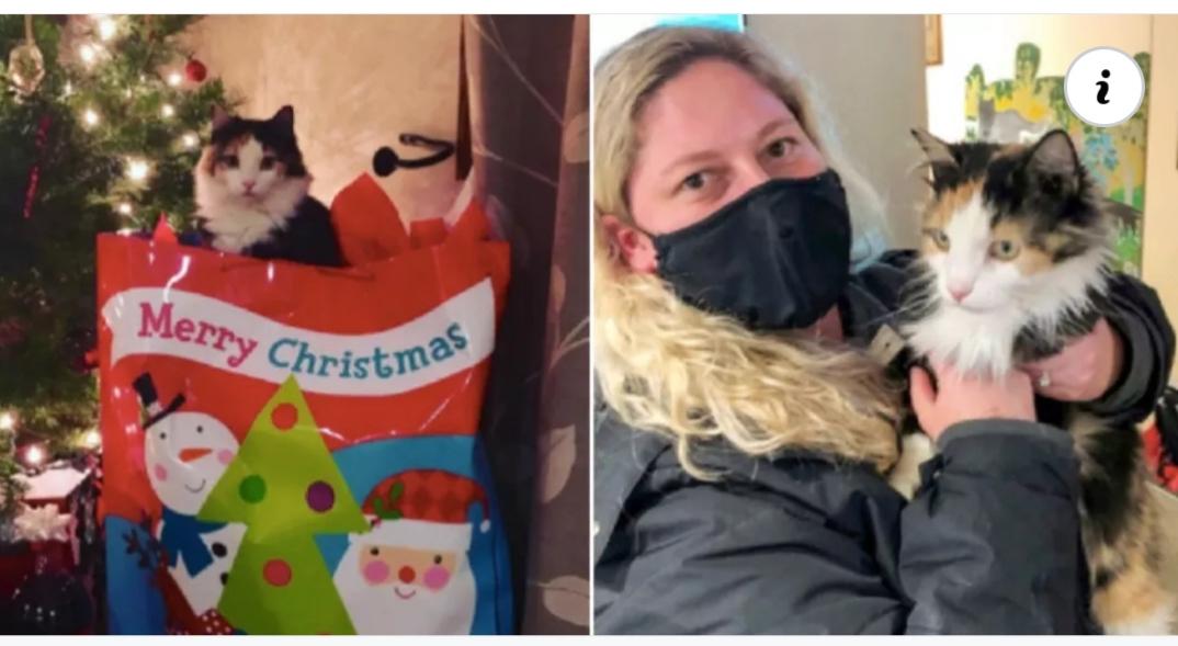 Un gato volvió milagrosamente a su casa después de haber desaparecido hace 5 años