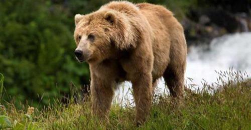 Tomó del cuello a un oso y lo golpeó hasta el cansancio para salvar a su perro