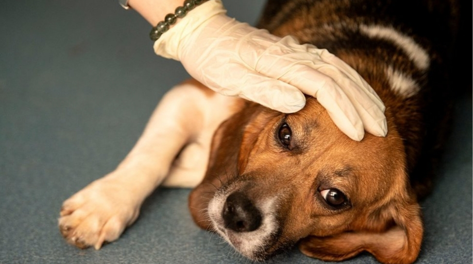 Qué síntomas tienen y cómo cuidar a los animales con coronavirus