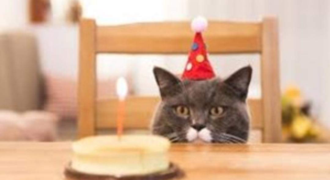 Al menos 15 personas se contagiaron de coronavirus en la fiesta de cumpleaños de un gato