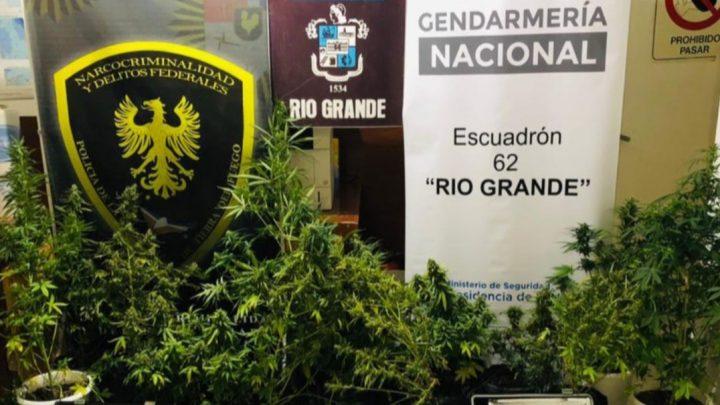 Insólito: Usaban dos viviendas del IPV como invernaderos para marihuana